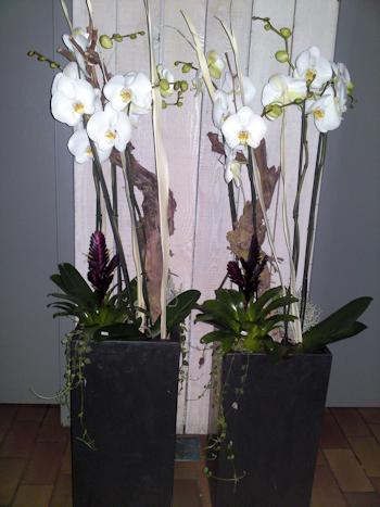 Blumen Michael Winter Floristmeister Koln Thenhoven
